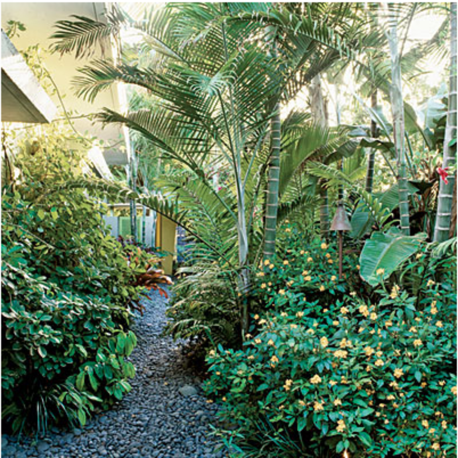 All Things Tropical: Create Your Own Backyard Oasis